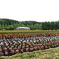 D3-04.富田農場 (5).jpg