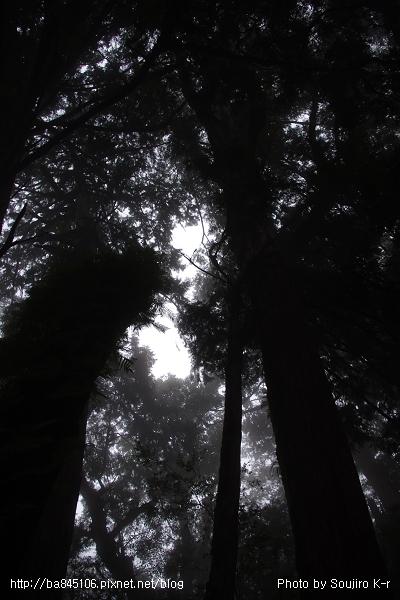 2011.09.10.宜蘭.棲蘭.明池山莊神木二日遊 (224).jpg