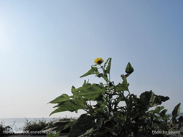 980502.漢寶濕地 (11).jpg
