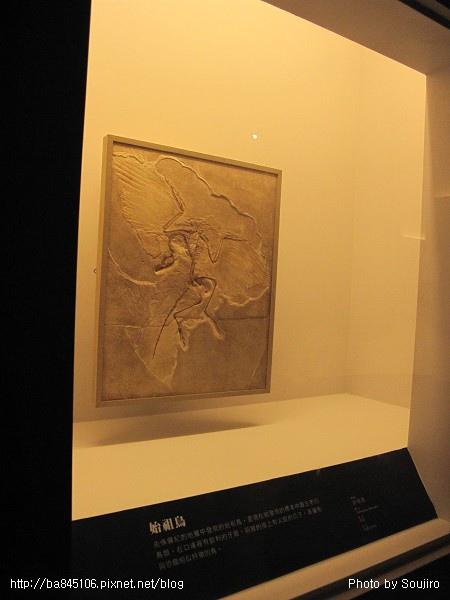 100117-2.中正紀念堂.世界恐龍展 (37).jpg