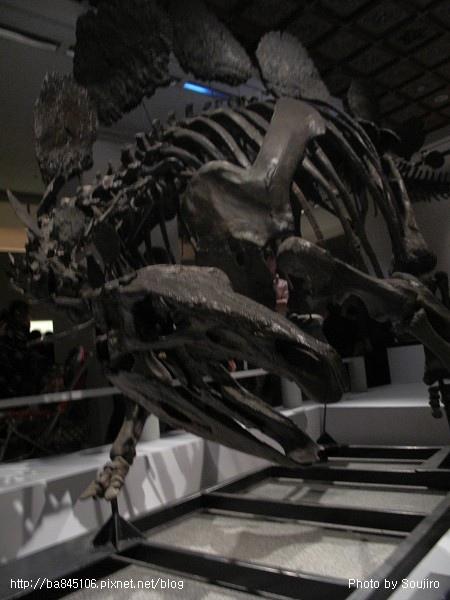 100117-2.中正紀念堂.世界恐龍展 (78).jpg