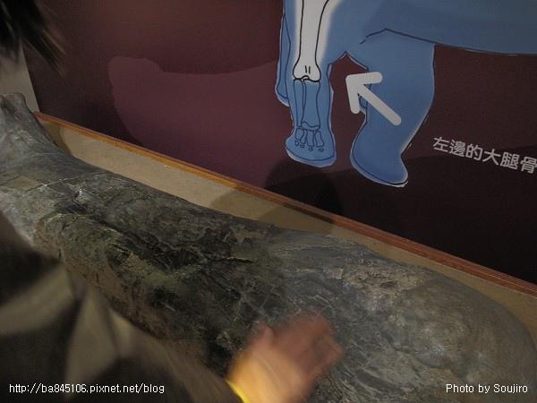 100117-2.中正紀念堂.國際恐龍展 (115).jpg