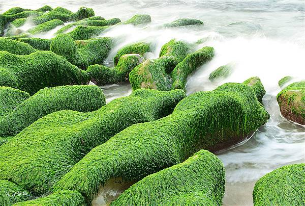 老梅綠石槽1