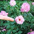 可愛的小花