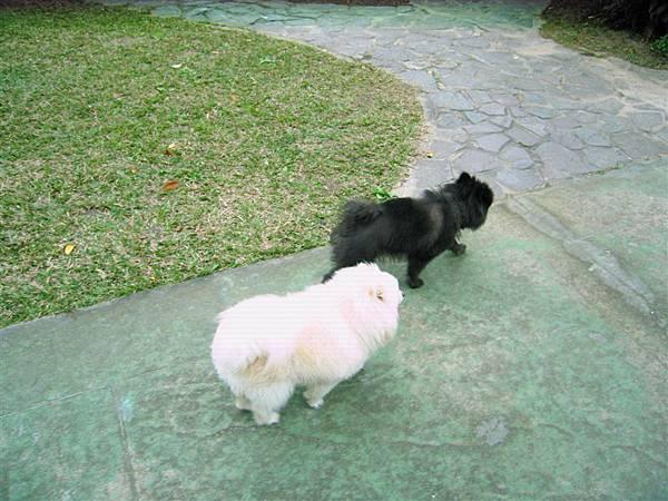 兩隻狗 一黑一白真可愛