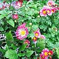 我喜歡這種花