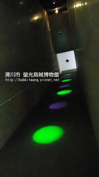 螢光烏賊博物館