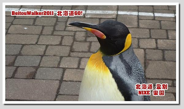 DSC02536.jpg