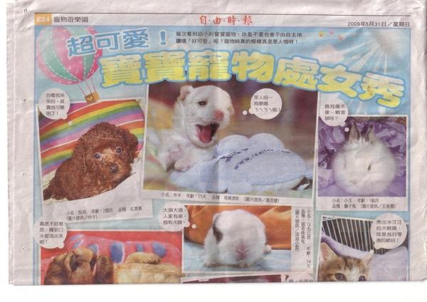 小布卡上報紙.JPG