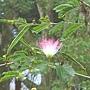 東勢林場的花