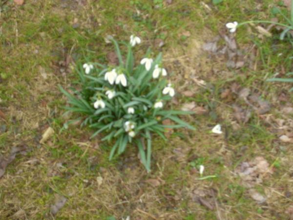 英國公園路邊疑似小白花的植物