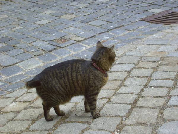 洛登堡的貓咪