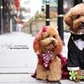 狗狗拍婚紗