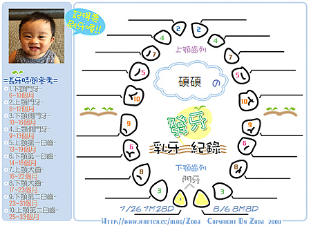 發牙表原圖(第一二顆).png