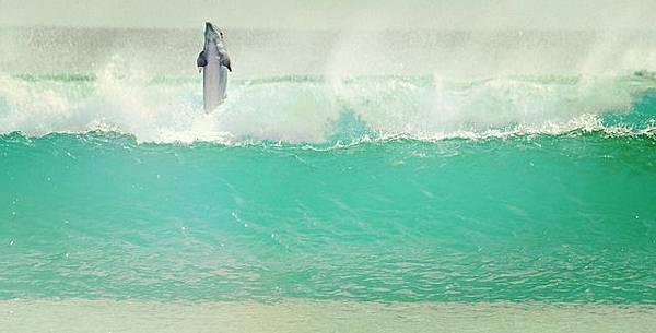 dolphin-1201152_640.jpg