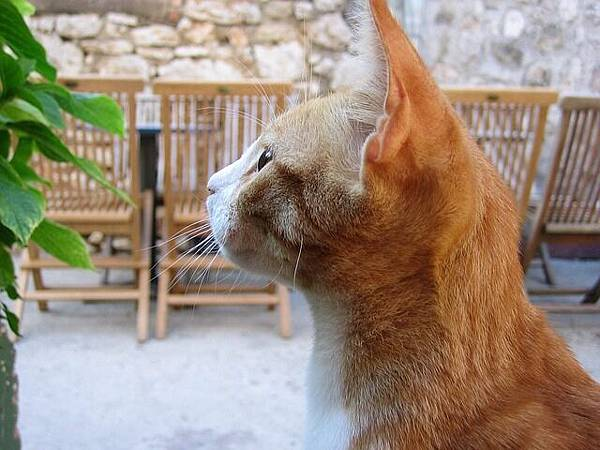 cat-201855_640.jpg