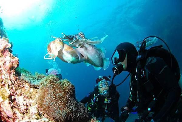 diving-689831_640.jpg