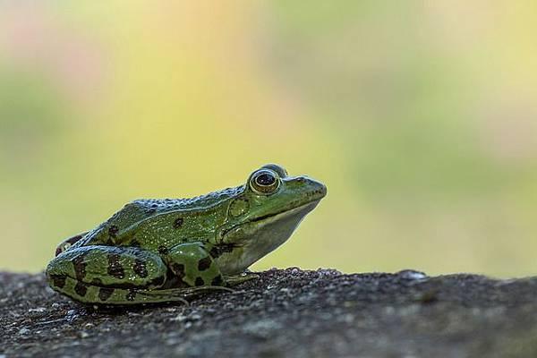 frog-2195531_640.jpg