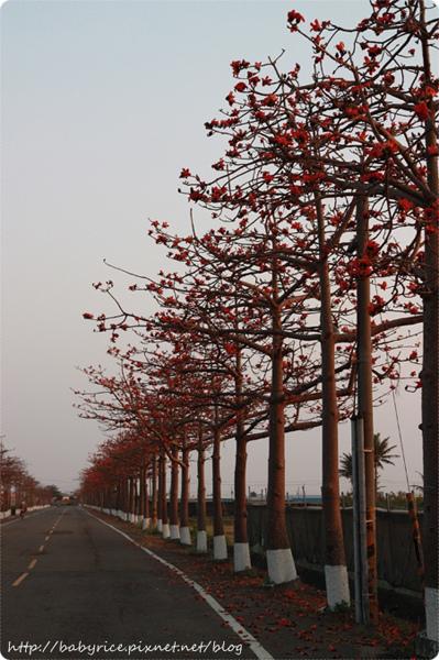 台南將軍區・關燈版木棉花道5