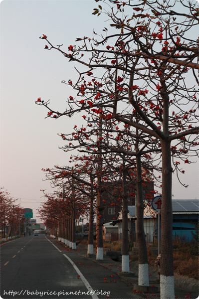 台南將軍區・關燈版木棉花道8