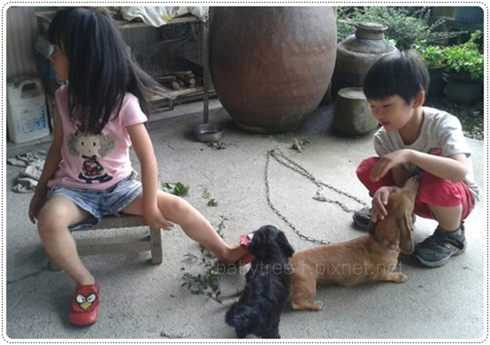 小孩和狗狗