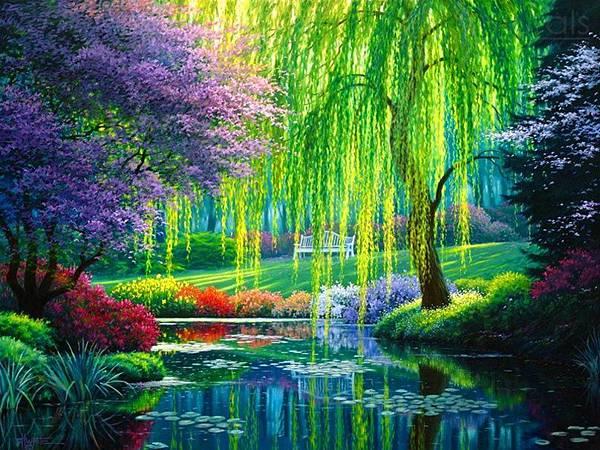 柳樹Willow01