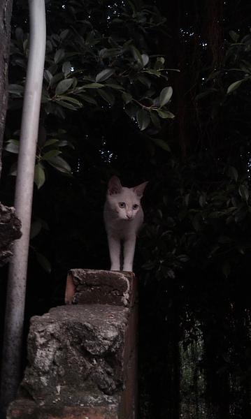 White Cat.jpg