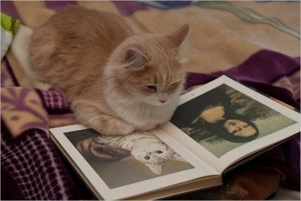Fat Cat's Puzzle.jpg
