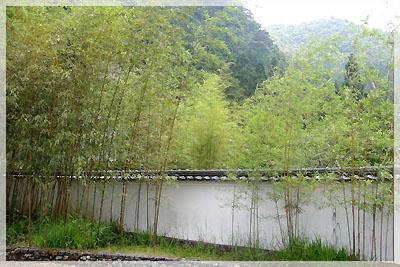 日式風格的竹林