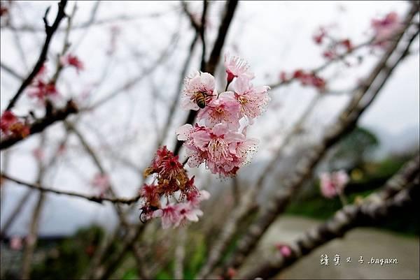蟬說鳳凰亭序 (84).JPG