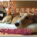 DSCF6070.jpg