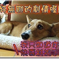 DSCF6069.jpg
