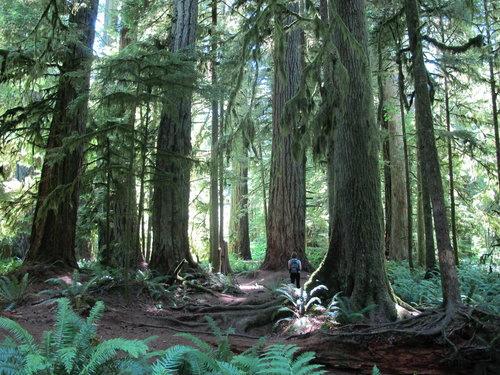 加拿大森林.jpg