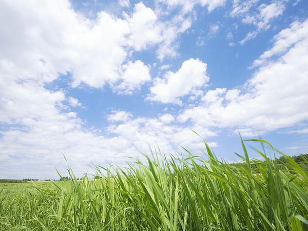 green-grassland-under-sky-photo-009.jpg