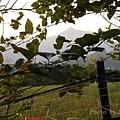 田園-風景-001.jpg