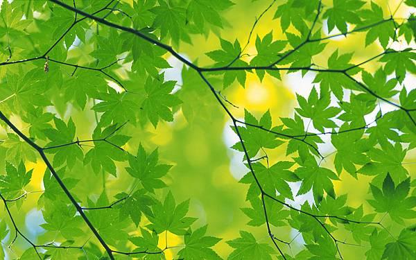 2560x1600-fresh-green-leaves-2560x1600-no29-desktop.jpg