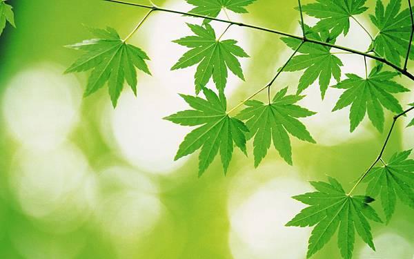 Fresh-Green-Leaves-Theme-Desktop-9.jpg