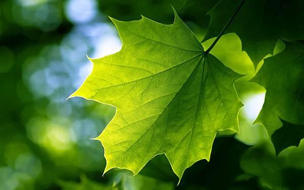 Green-Leaf-Wide-Desktop-Wallpaper.jpg