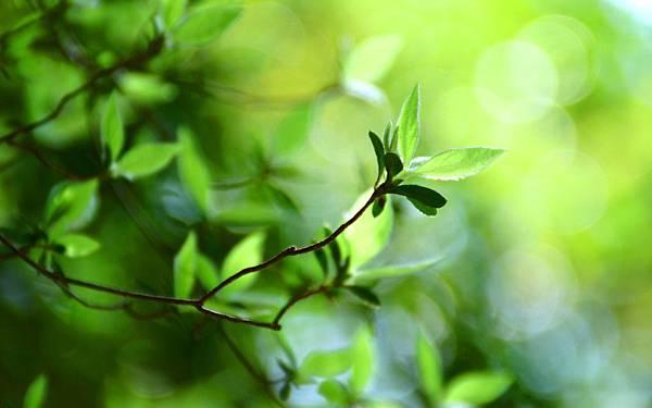 Nature-Green-Leaf-Desktop-Wallpaper.jpg