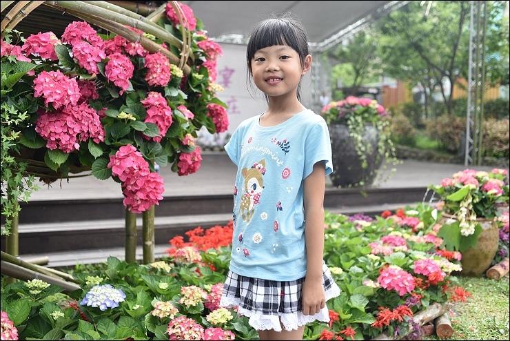 南庄繡球花