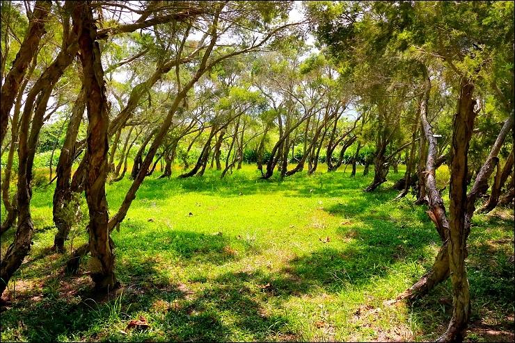 自然生態公園 (4)