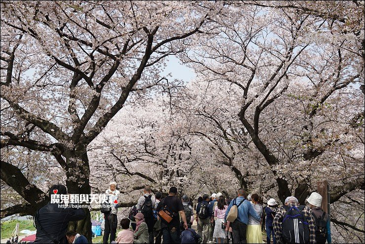 京都背割堤