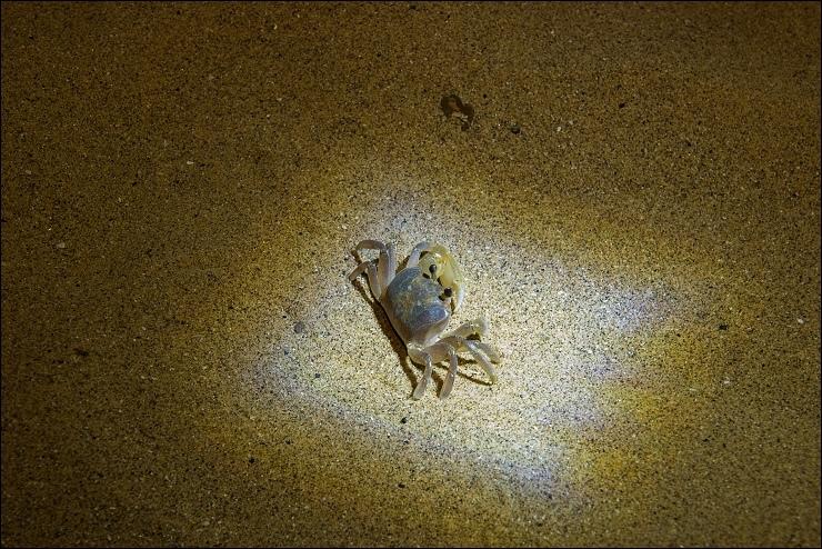 夜訪沙蟹2.jpg
