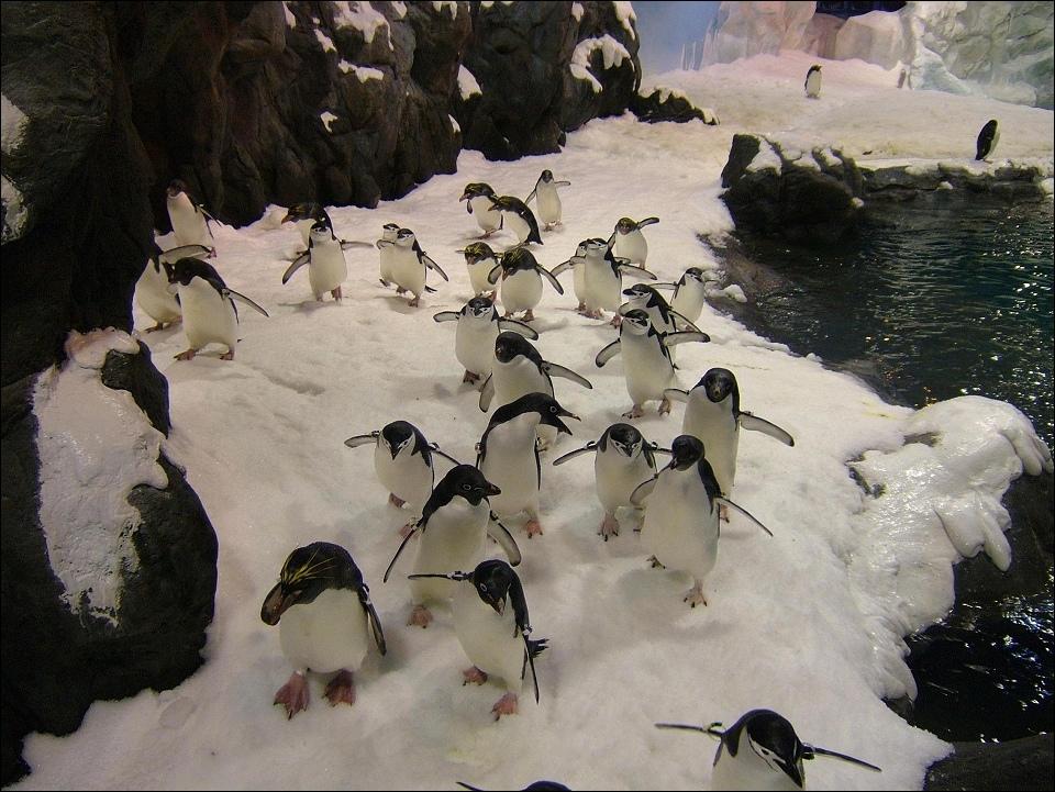 3企鵝群.jpg