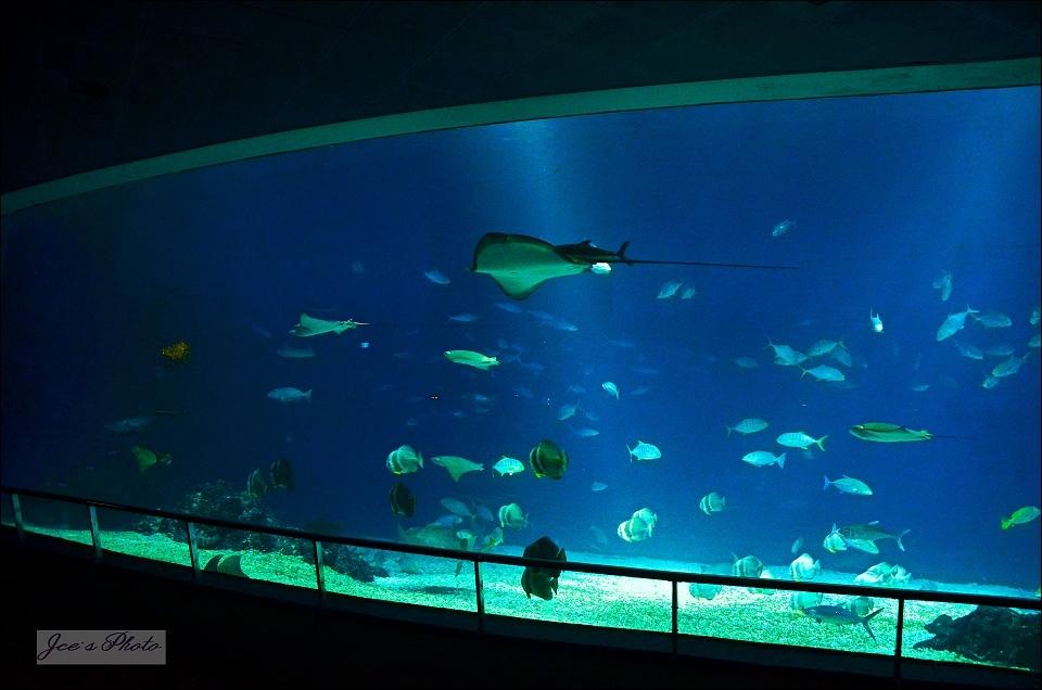 大洋池.jpg
