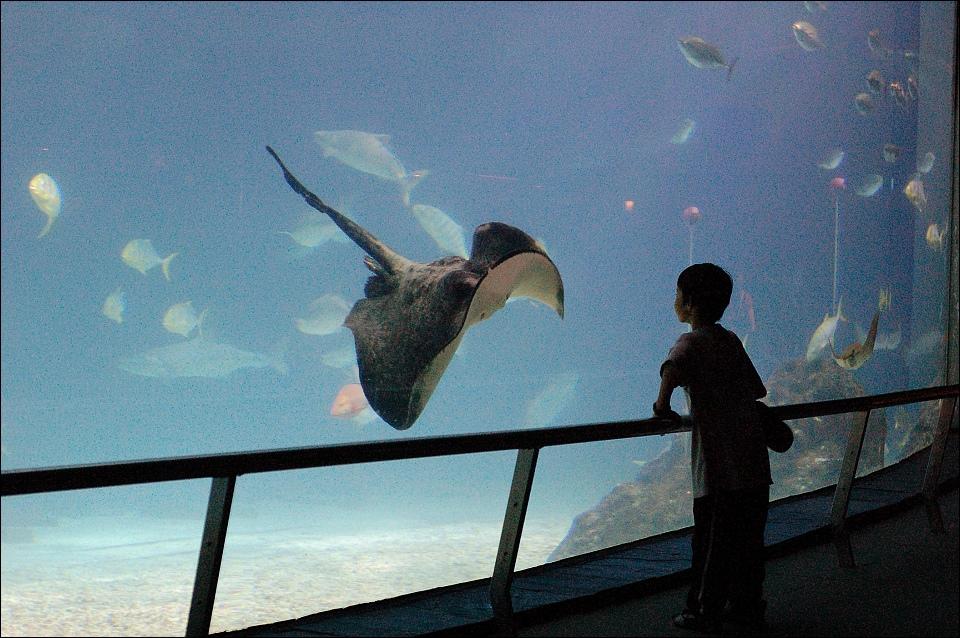 大洋池魟魚與小孩.jpg