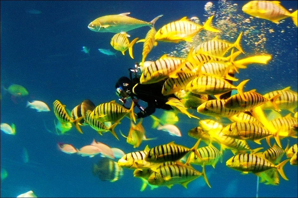 大洋餵食秀.jpg