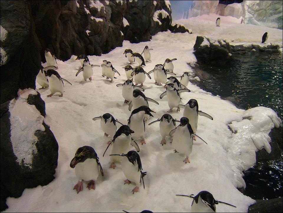 企鵝群.jpg