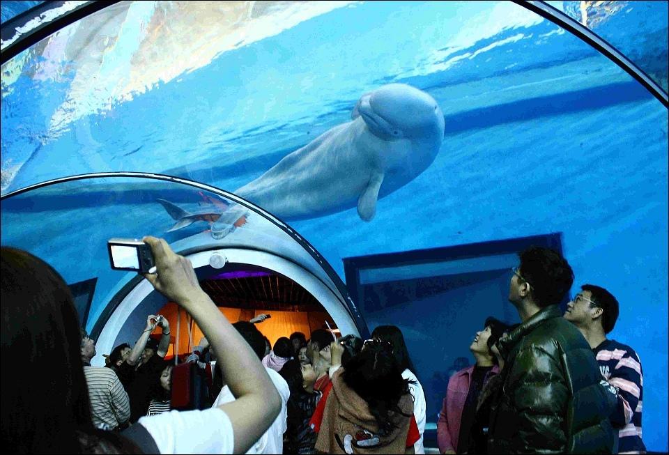 珊瑚王國館-小白鯨.jpg