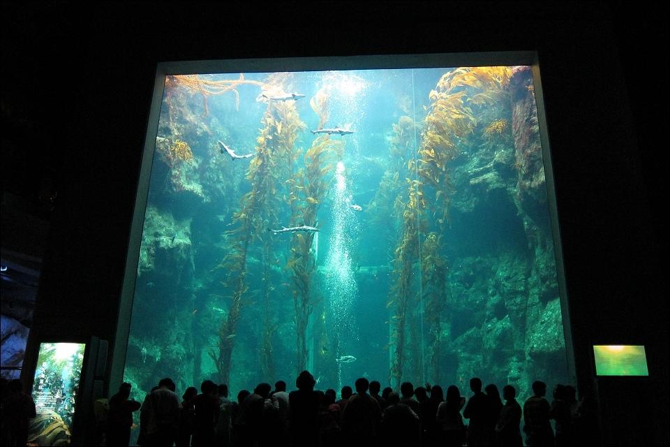 海生館-世界水域館巨藻缸.jpg